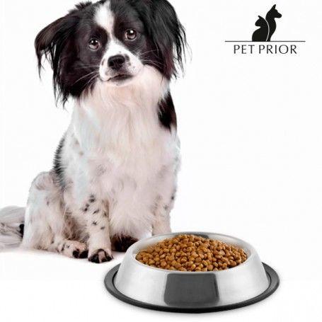 Pet Prior Dog Feeder